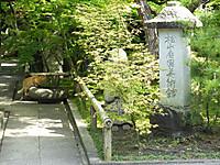 Nekoneko20150429_01