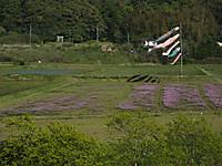 Otaki_renge20150426_01