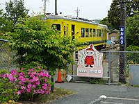 Isumi_otaki20150509_02