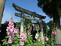 Isumi_otaki20150605_03