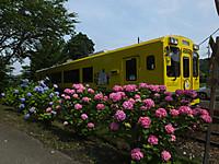 Isumi_koyamatu20150615_13