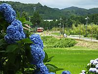 Isumi_koyamatu20150621_03