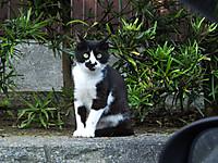 Isumi_koyamatu20150712_02