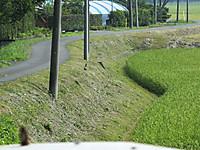 Isumi_nisiohara20150802_10