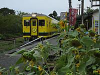 Isumi350_20150819_06