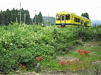 Isumi300_20150913_16
