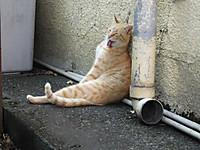 Kawagoe20151012_19