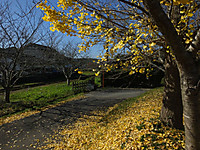 Isumi_nakagawa20151121_11