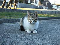 Sikoku20160109_56