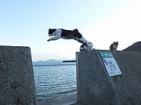Sikoku20160109_62