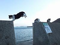 Sikoku20160109_63