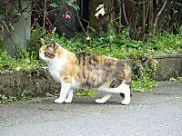 Kameyama20160310_07