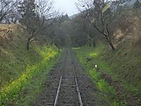 Isumi_rail20160319_06