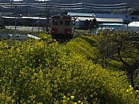 Isumi_kiha20_20160325_04
