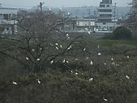 Tuchiura20160403_06