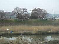 Tuchiura20160403_07