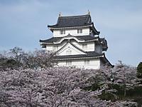 Isumi_otaki20160406_05