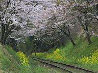 Isumi_rail20160410_04