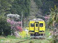 Isumi350_20160410_06