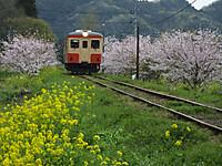 Isumi_kiha20_20160410_11