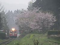 Isumi_kiha20_20160411_03