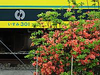 Isumi_otaki20160423_04