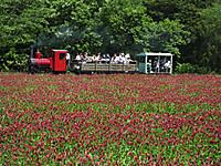 Narita20160505_44