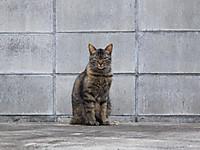 Isumi_otaki20160523_03