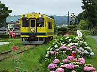 Isumi300_20160614_02