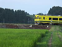 Isumi300_20160714_04