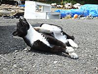 Tasirojima20160902_28