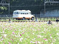 Sakura20161015_09