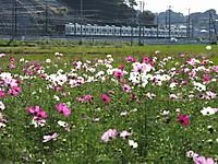 Sakura20161015_10