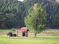 Isumi_koyamatu20161026_02