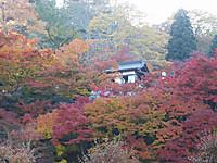 Ibaraki20161113_78