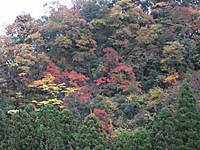 Yamabiko20161123_10