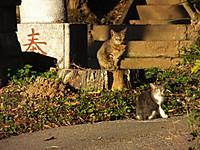 Isumi_nakagawa20161209_01