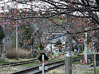 Kameyama20170309_05