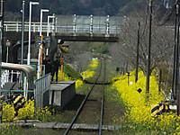 Isumi_rail20170318_25