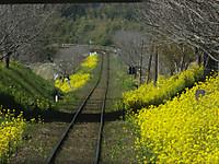 Isumi_rail20170318_26