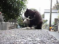 Shingu20180105_45