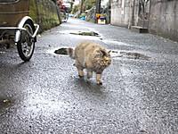 Shingu20180105_55