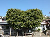 Yushima20180106_66