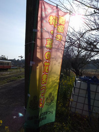 Isumi_kuniyosi20170405_02