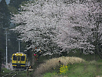 Isumi300_20170413_02