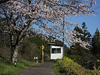 Isumi_kugahara20170414_06