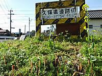 Isumi_nakagawa20170412_05