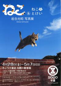 Neko_sogou_20170507_11