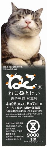 Neko_sogou_20170507_12