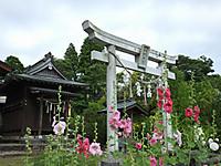 Isumi_otaki20170605_03